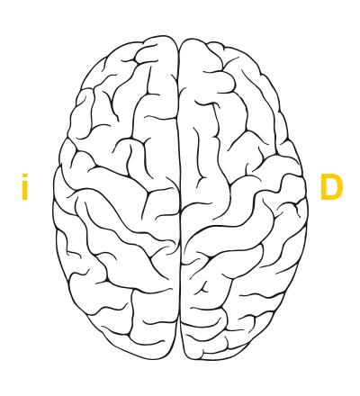 ¿Cuál es su hemisferio cerebral predominante? ¿Derecho o ...